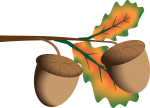 Stylized oak tree branch with leaves and acorns